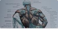 Il valore di una schiena (alta) forte