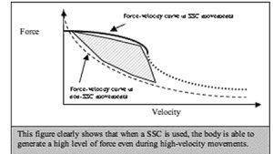 Grafico della curva teorica forza-velocità
