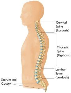 Descrizione curve colonna vertebrale